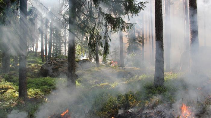 Eldningsförbud utfärdat i Östergötlands län