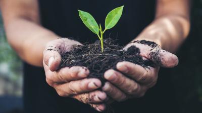 Nu startar Grön Rehabilitering i Möjligheternas trädgård